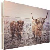 Portret van twee Schotse hooglanders Vurenhout met planken 90x60 cm - Foto print op Hout (Wanddecoratie)