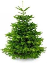 Premium Nordmann Kerstboom 125cm (zonder kluit)