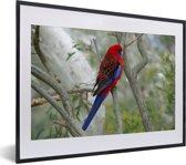 Foto in lijst - Knalrode parkiet in een boom fotolijst zwart met witte passe-partout klein 40x30 cm - Poster in lijst (Wanddecoratie woonkamer / slaapkamer)