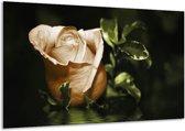 Glasschilderij Bloem | Wit, Bruin, Groen | 120x70cm 1Luik | Foto print op Glas |  F002581