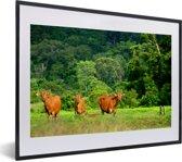 Foto in lijst - Grazende Banteng in het Nationaal park Alas Purwo in Oost-Java fotolijst zwart met witte passe-partout klein 40x30 cm - Poster in lijst (Wanddecoratie woonkamer / slaapkamer)