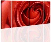 Schilderij - Gepassioneerde roos , rood , 4 luik