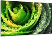 Glasschilderij Roos | Geel, Groen, Grijs | 120x70cm 1Luik | Foto print op Glas |  F003840