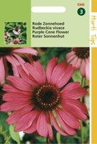 Hortitops Zaden - Rode Zonnehoed (Echinacea purpurea)