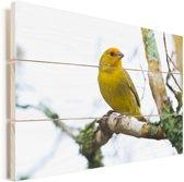 Gele kanarie in herfstachtige takken van een boom Vurenhout met planken 60x40 cm - Foto print op Hout (Wanddecoratie)