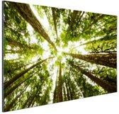 Hoge groene bomen in jungle Aluminium 120x80 cm - Foto print op Aluminium (metaal wanddecoratie)