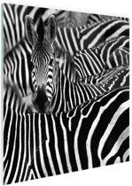 Zebra zwart-wit  Glas 180x120 cm - Foto print op Glas (Plexiglas wanddecoratie) XXL / Groot formaat!