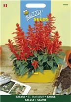 Vuursalie Sint Jansvuur - Salvia splendens