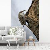 Fotobehang vinyl - Boomkruiper in de natuur breedte 215 cm x hoogte 320 cm - Foto print op behang (in 7 formaten beschikbaar)