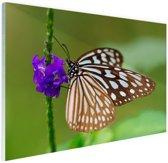 Vlinder paarse bloem Glas 60x40 cm - Foto print op Glas (Plexiglas wanddecoratie)