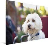 Schattige Maltezer hond Canvas 90x60 cm - Foto print op Canvas schilderij (Wanddecoratie woonkamer / slaapkamer) / Huisdieren Canvas Schilderijen