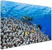 Onderwater rif met vissen Canvas 120x80 cm - Foto print op Canvas schilderij (Wanddecoratie woonkamer / slaapkamer)
