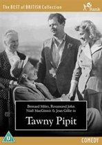 Tawny Pipit (dvd)