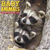 Baby Animals 2019 Kalender