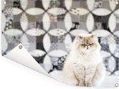 Perzische kat die niet opvalt door de achtergrond Tuinposter 80x60 cm - Tuindoek / Buitencanvas / Schilderijen voor buiten (tuin decoratie)