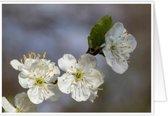 Bijzondere wenskaarten met exclusieve natuurfoto's - Bloemen