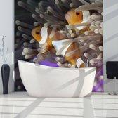 Fotobehang - Clownfish
