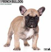 Franse Bulldog Kalender 2020 Modern