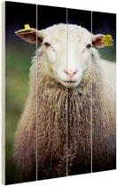Portret van een schaap Hout 80x120 cm - Foto print op Hout (Wanddecoratie)