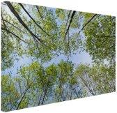 FotoCadeau.nl - Foto van het bos in de zomer Canvas 60x40 cm - Foto print op Canvas schilderij (Wanddecoratie)