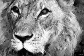 Leeuw in geschilderde olieverf look, zwart wit | dieren, sfeer, modern | Foto schilderij print op Dibond / Aluminium (metaal wanddecoratie) | 150x100cm