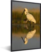 Foto in lijst - Reflectie van een lepelaar in het kalme water fotolijst zwart 40x60 cm - Poster in lijst (Wanddecoratie woonkamer / slaapkamer)