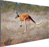 Een springende kangoeroe Aluminium 90x60 cm - Foto print op Aluminium (metaal wanddecoratie)