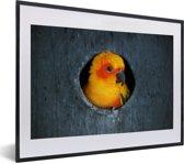 Foto in lijst - Een Zonparkiet zit in een nest in een boom fotolijst zwart met witte passe-partout klein 40x30 cm - Poster in lijst (Wanddecoratie woonkamer / slaapkamer)