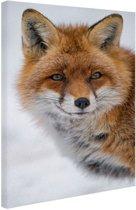 Portret van een vos Canvas 40x60 cm - Foto print op Canvas schilderij (Wanddecoratie woonkamer / slaapkamer) / Dieren Canvas Schilderijen