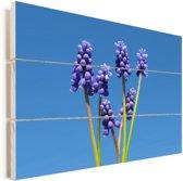 Druivenhyacinten en een heldere blauwe hemelachtergrond Vurenhout met planken 80x60 cm - Foto print op Hout (Wanddecoratie)