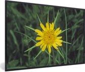 Foto in lijst - Gele morgenster tussen het groene gras fotolijst zwart 60x40 cm - Poster in lijst (Wanddecoratie woonkamer / slaapkamer)