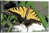 Dibond – Gele Vlinder– 90x60 Foto op Aluminium (Wanddecoratie van metaal)
