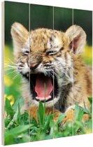 Siberische Tijgerwelp brullen Hout 40x60 cm - Foto print op Hout (Wanddecoratie)