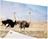 Twee rennende struisvogels Tuinposter 200x100 cm - Tuindoek / Buitencanvas / Schilderijen voor buiten (tuin decoratie) XXL / Groot formaat!