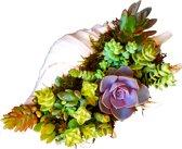 Echeveria Vetplantjes in Conch Schelp. Handgemaakt. Uniek cadeau, Leuk voor kantoor of Huiskamer