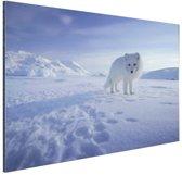 Poolvos in de sneeuw Aluminium 30x20 cm - klein - Foto print op Aluminium (metaal wanddecoratie)
