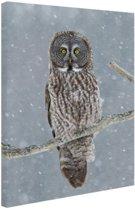 Uil in de sneeuw Canvas 40x60 cm - Foto print op Canvas schilderij (Wanddecoratie)
