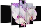 Glasschilderij Orchidee   Paars, Zwart, Wit   170x100cm 5Luik   Foto print op Glas    F000384