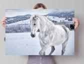 Paard  - Poster 91.5 x 61 cm