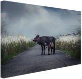 Koe met kalf Canvas 30x20 cm - Foto print op Canvas schilderij (Wanddecoratie)
