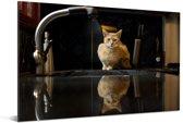Een Abessijn kat op het aanrecht Aluminium 60x40 cm - Foto print op Aluminium (metaal wanddecoratie)