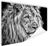 Leeuw in de winter  Poster 60x40 cm - Foto print op Poster (wanddecoratie)