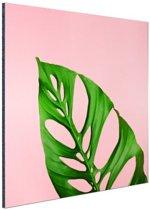 Botanisch blad met roze achtergrond Aluminium 50x50 cm - Foto print op Aluminium (metaal wanddecoratie)