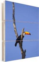 Reuzentoekan uitkijkend vanuit een boom Vurenhout met planken 60x90 cm - Foto print op Hout (Wanddecoratie)