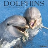 Dolphins 2020 Wall Calendar