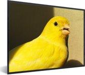Foto in lijst - Mooie gele kanarie vogel in Barcelona fotolijst zwart 40x30 cm - Poster in lijst (Wanddecoratie woonkamer / slaapkamer)