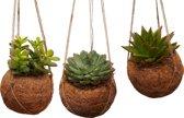 Cocos Trio Met Vetplanten Leuke Hangplanten! Kantoor Huiskamer Cadeau