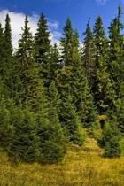Pine Tree Journal