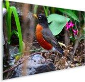 Roodborstlijster op een steen in een tuin Plexiglas 90x60 cm - Foto print op Glas (Plexiglas wanddecoratie)