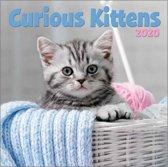 Kalender 2020 kittens (30,5 x 30,5)